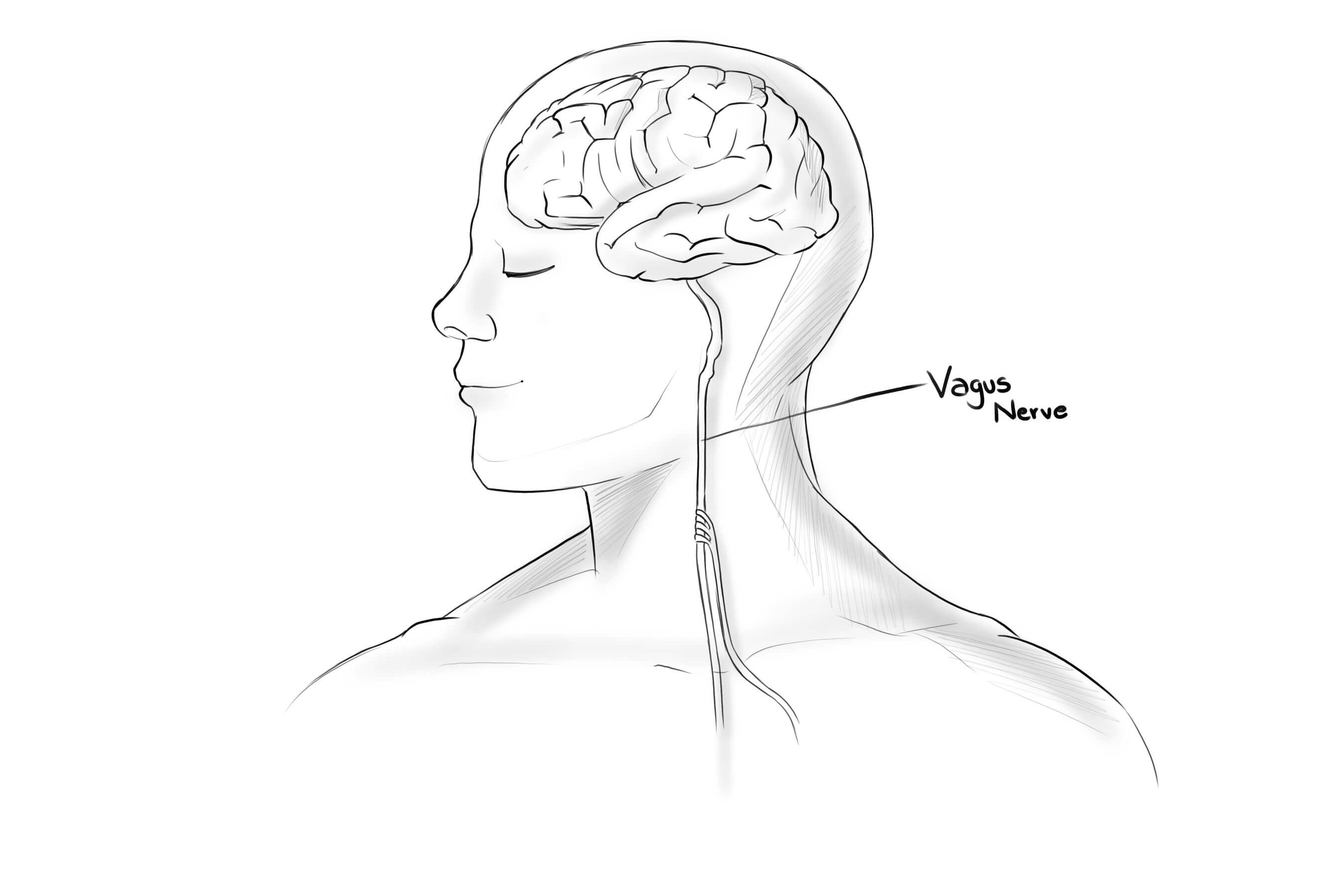 DIAGRAM OF VAGUS NERVE